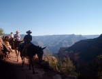 Descending the Grand Canyon...mule style.